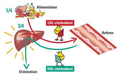 alimentation_et_cholesterol_medium